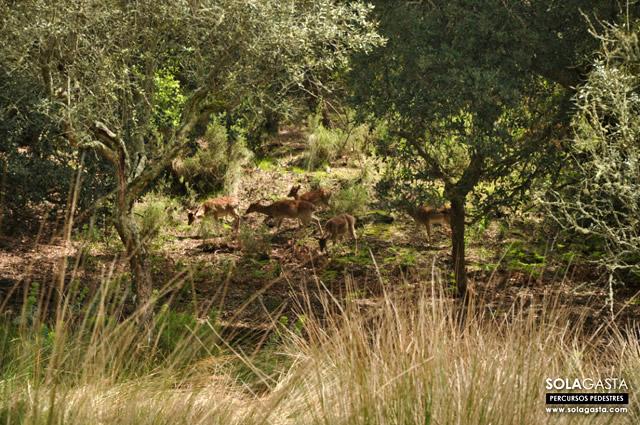 Percurso Amarelo (Percurso da Boavista) - Tapada Nacional de Mafra (Mafra)