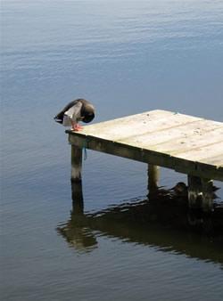 Percurso Pedonal - Lagoa da Barrinha (Mira)