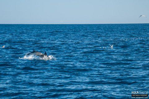Observação de Cetáceos (Funchal - Madeira)